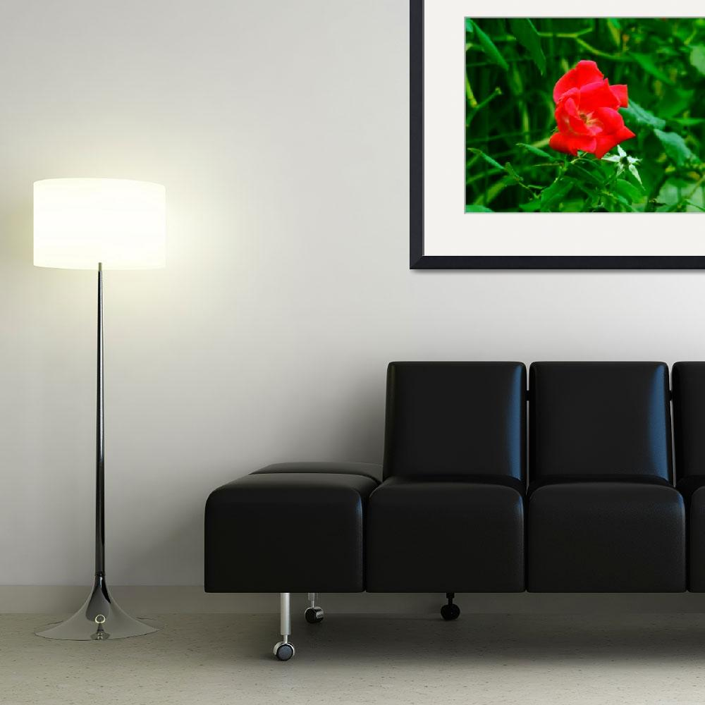 """""""flower study 1&quot  (2009) by awhoward"""