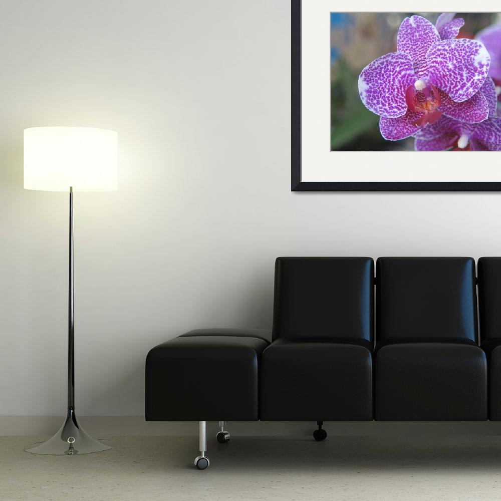 """Orchids Collection 02&quot  (2012) by mrosley"