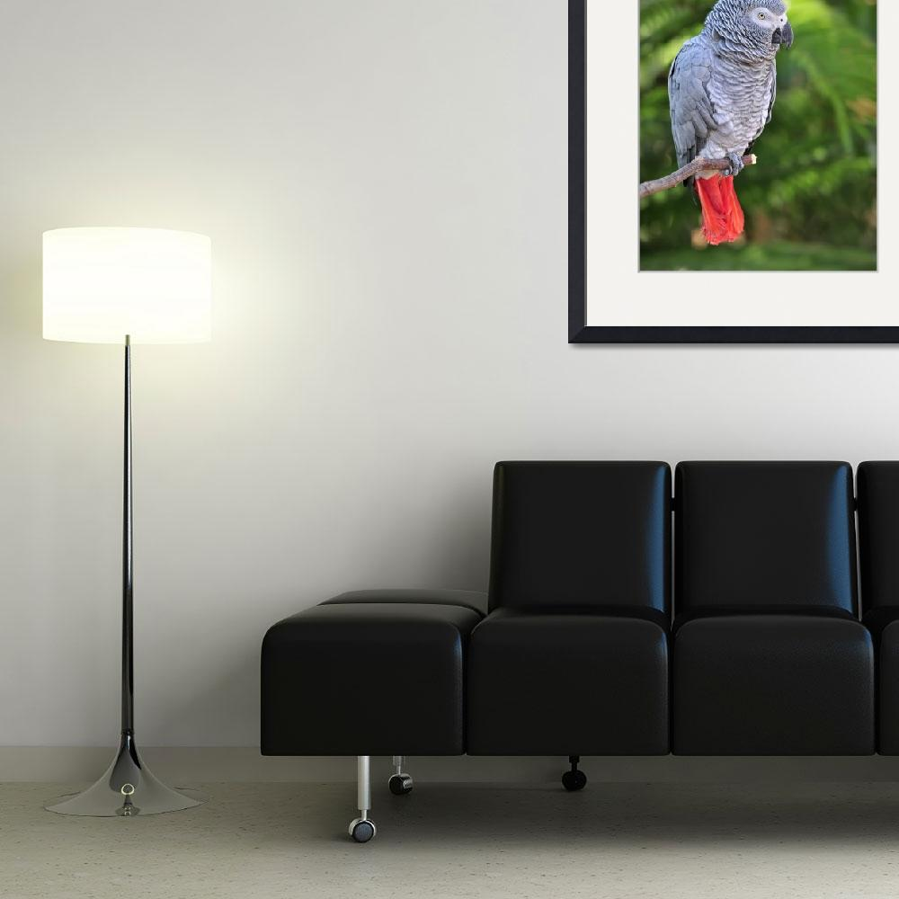 """""""WCC_0133- African Grey Parrot&quot  by photocell"""