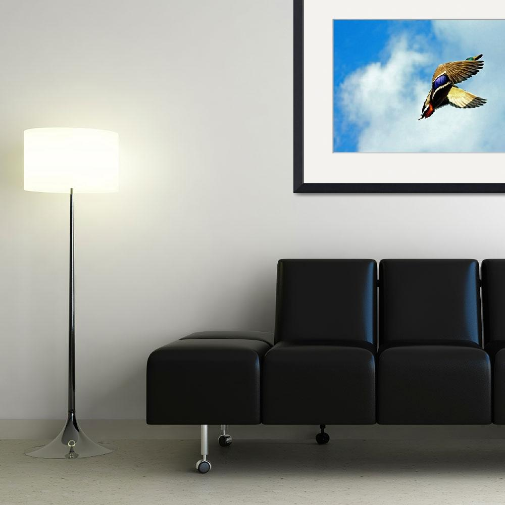 """""""Up, Up and Away&quot  (2010) by shelshots"""