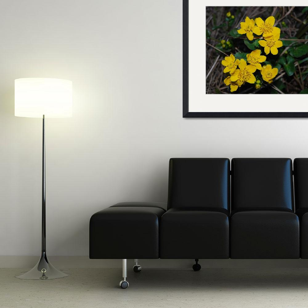 """Yellow flower&quot  (2007) by skabma"