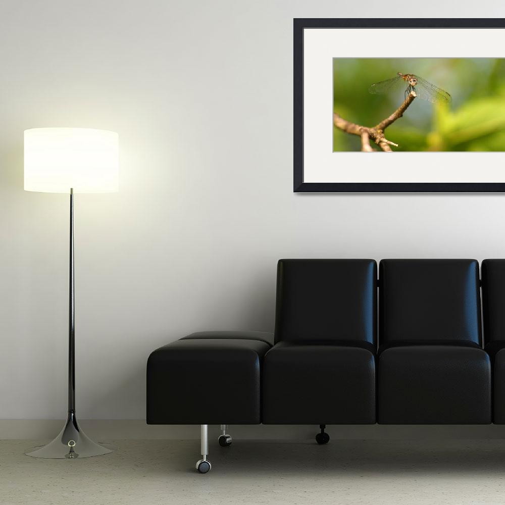 """""""Dragonfly&quot  (2012) by TealWingPhotography"""