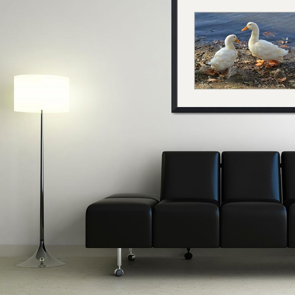 """""""Two White Ducks Sharing a Moment&quot  (2012) by theblueplanet"""