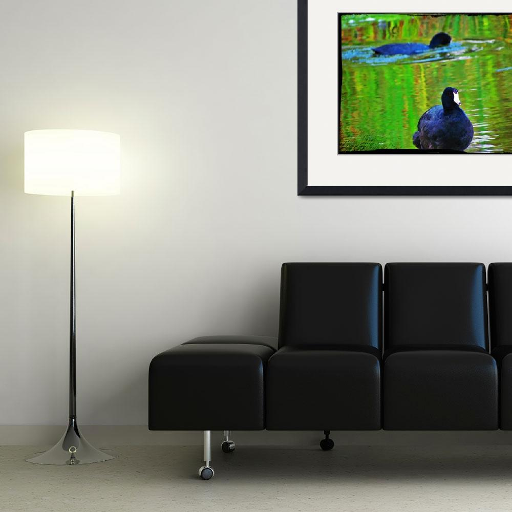 """""""American Coots&quot  (2011) by angelstudio54"""