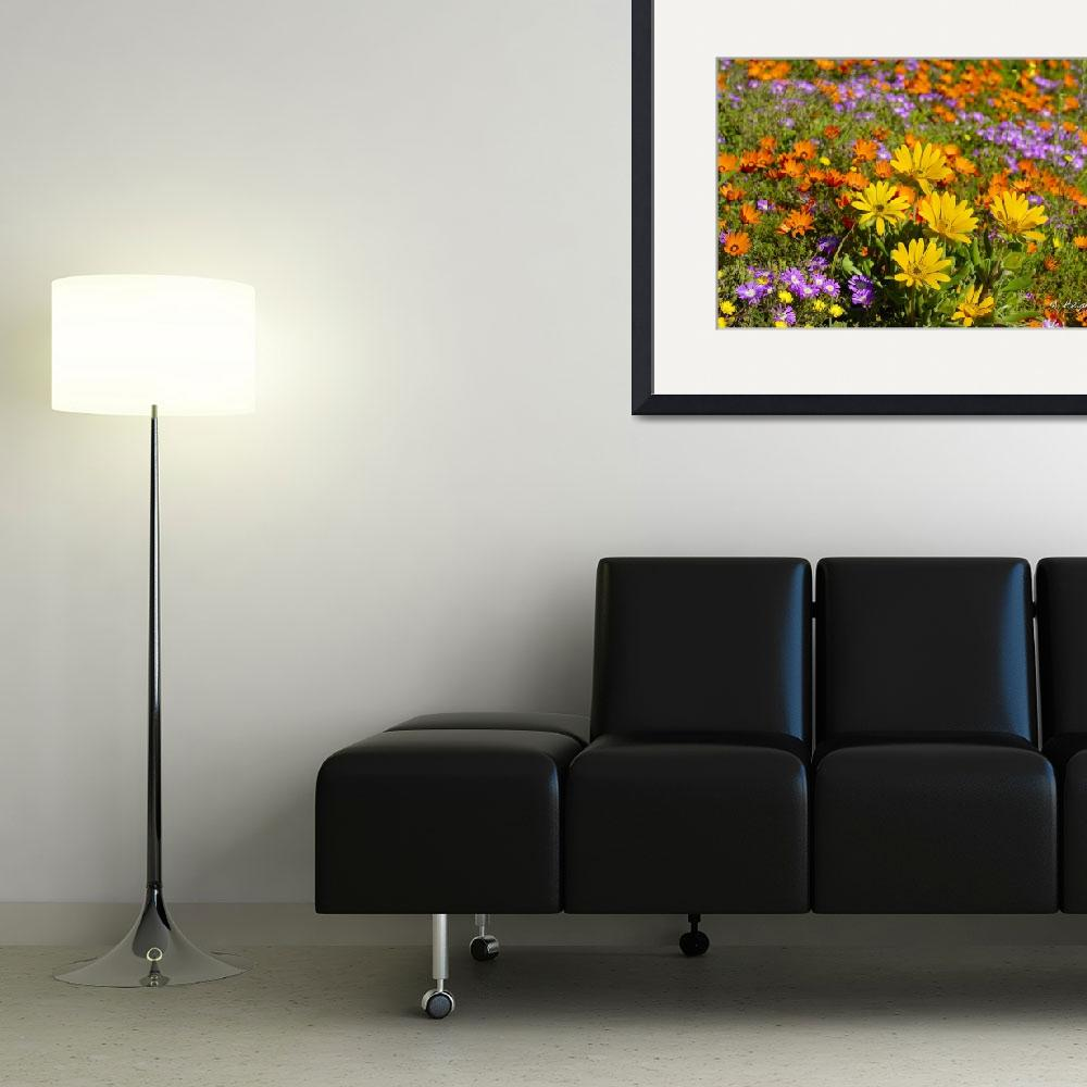 """""""The wild flower biodiversity of Namaqualand&quot  (2007) by Martin_Heigan"""