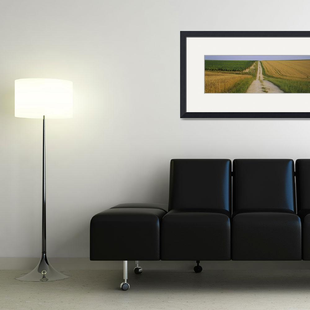 """""""Dirt road passing through a wheat field""""  by Panoramic_Images"""