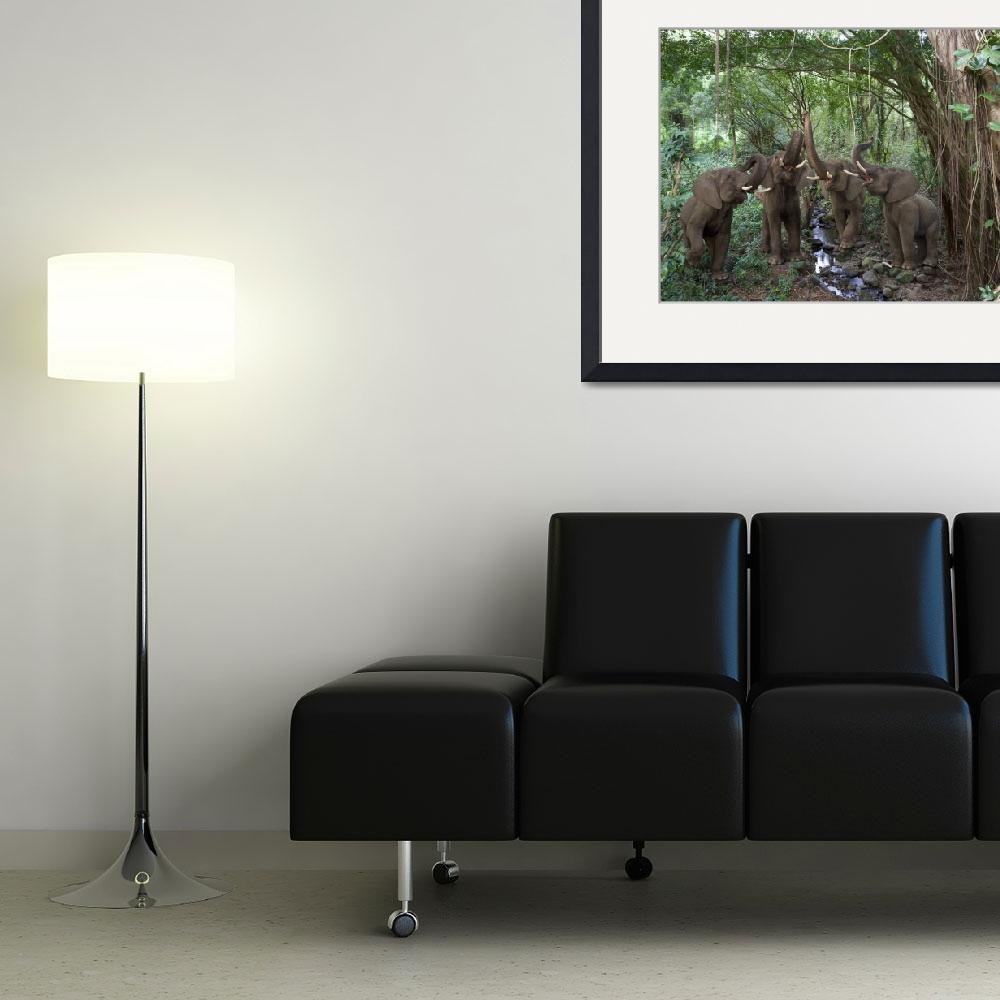 """""""Elephant Chorus deep in the rainforest&quot  (2009) by StephanieDRoeser"""