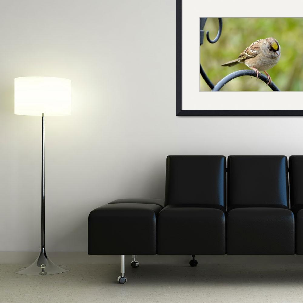 """""""Golden Crowned Sparrow, a New Season&quot  (2010) by LauraM"""