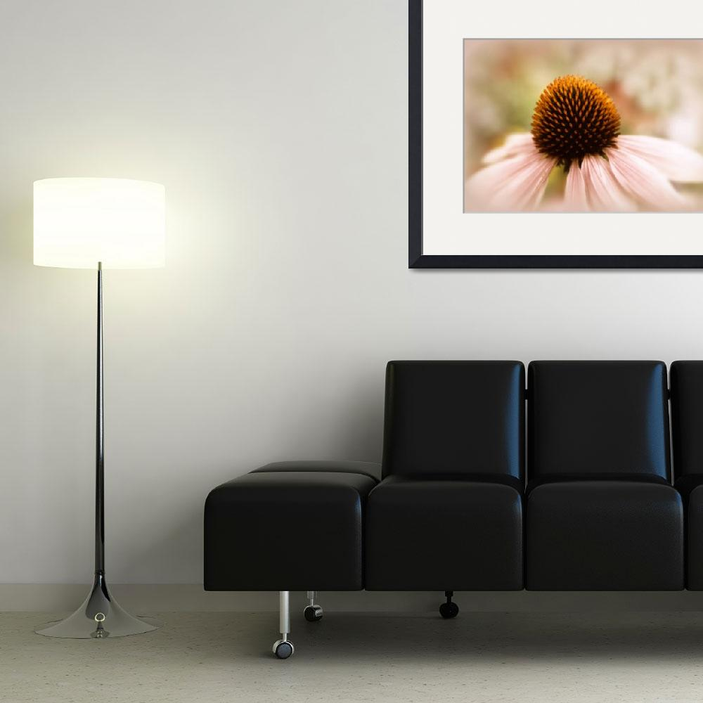 """""""Echinacea&quot  (2014) by JessicaJenney"""