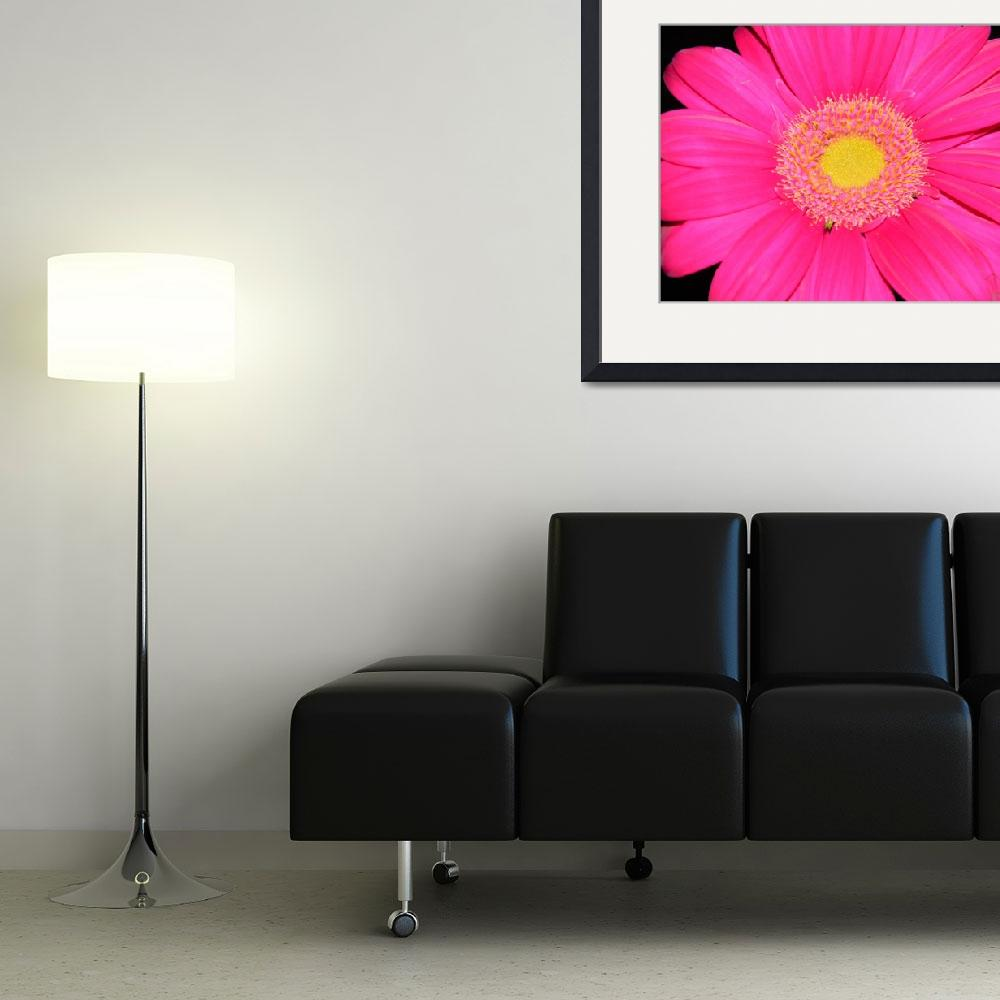 """""""Pink Explosion  106&quot  (2011) by photographybydonna"""