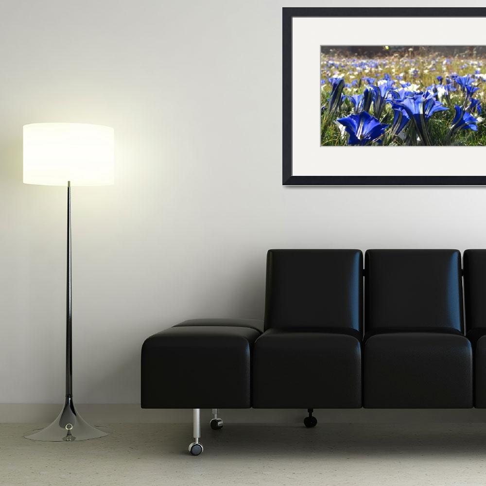"""""""Fields of Blue&quot  (2009) by DavidWhitney"""