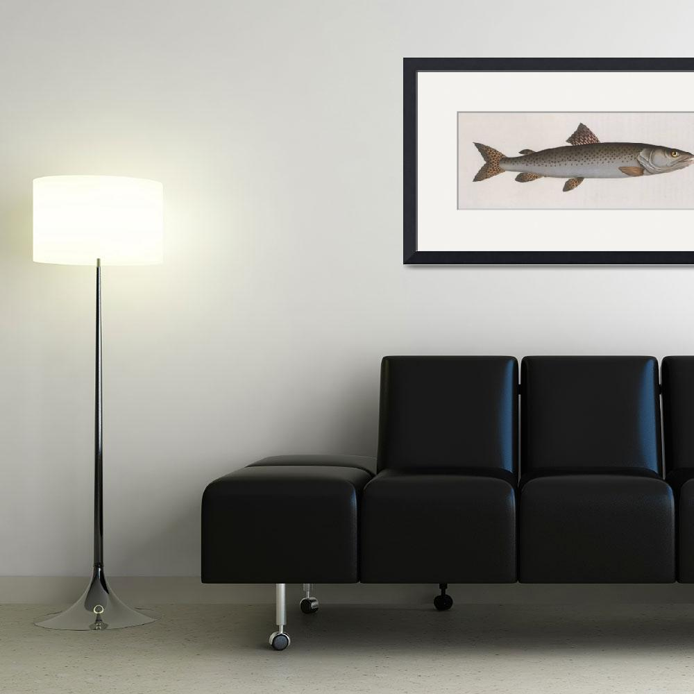 """""""Vintage Illustration of a River Salmon (1785)""""  by Alleycatshirts"""