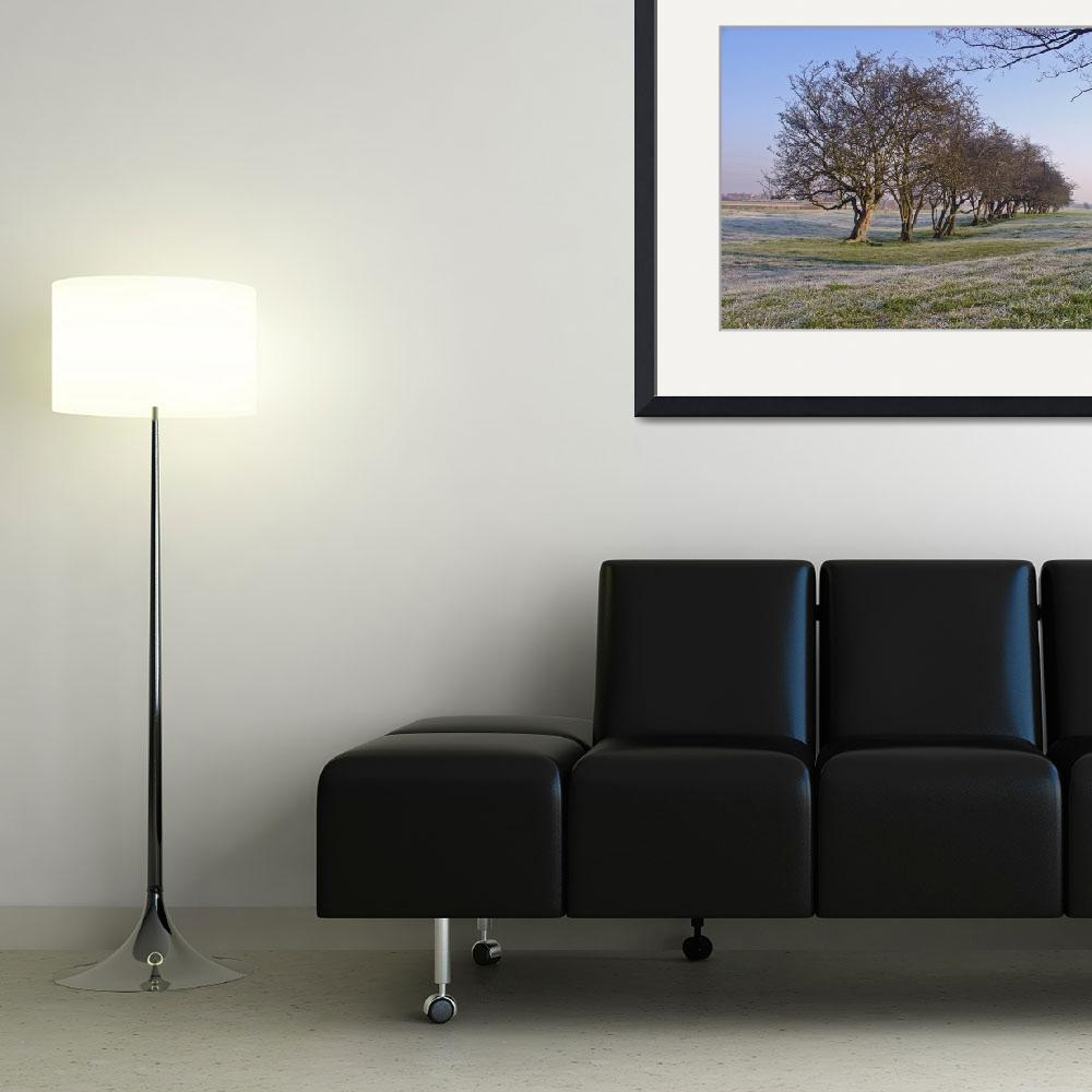 """""""Old Hedgerow  (15459-RDA)&quot  (2008) by rodjohnson"""