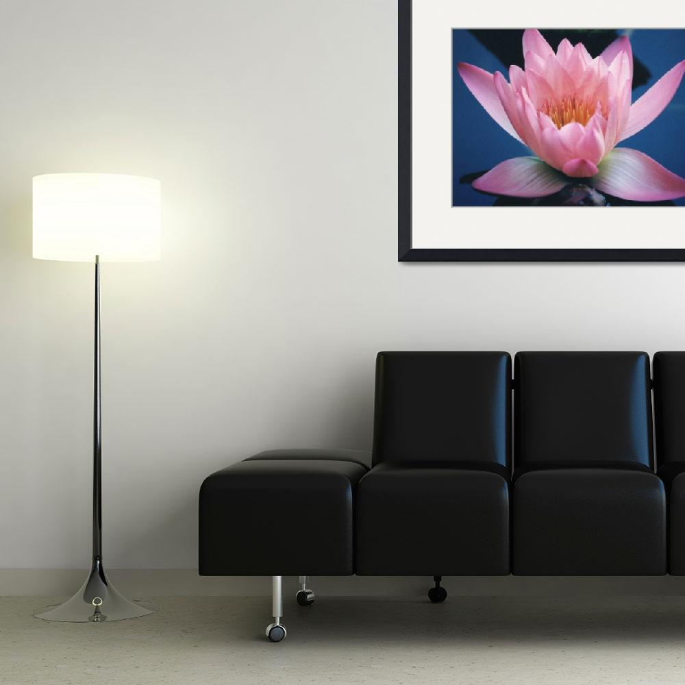 """""""Light Pink Water Lily""""  (2004) by carlosartworks"""
