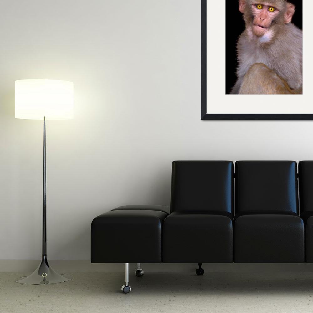 """Young Rhesus Macaque Paintover Effect&quot  by Serena"