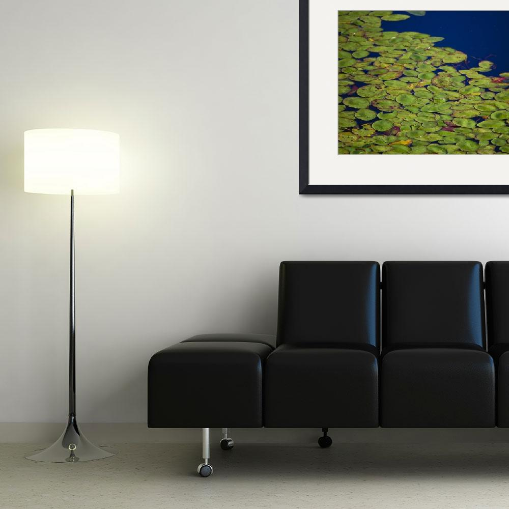 """""""Lily Pads""""  (2007) by NaturesExpressions"""