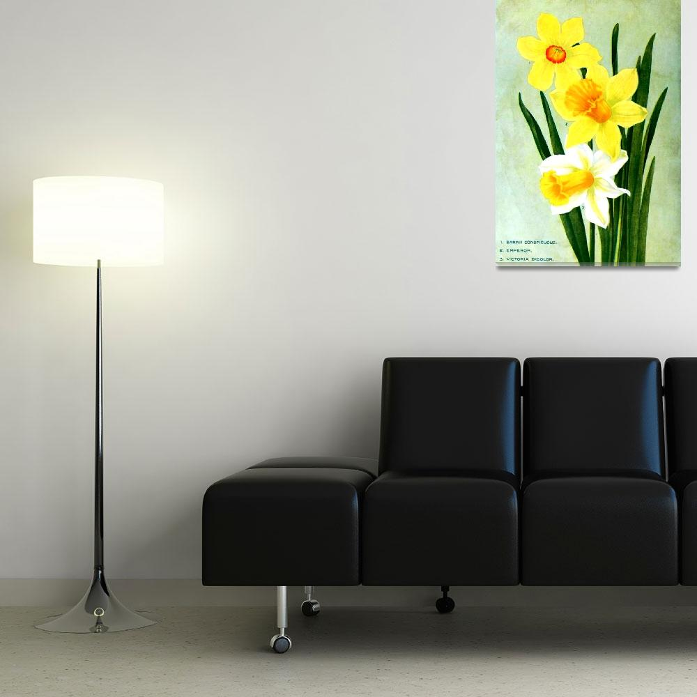 """Daffodil Flower Advertisement 1913""  (2013) by TheNorthernTerritory"
