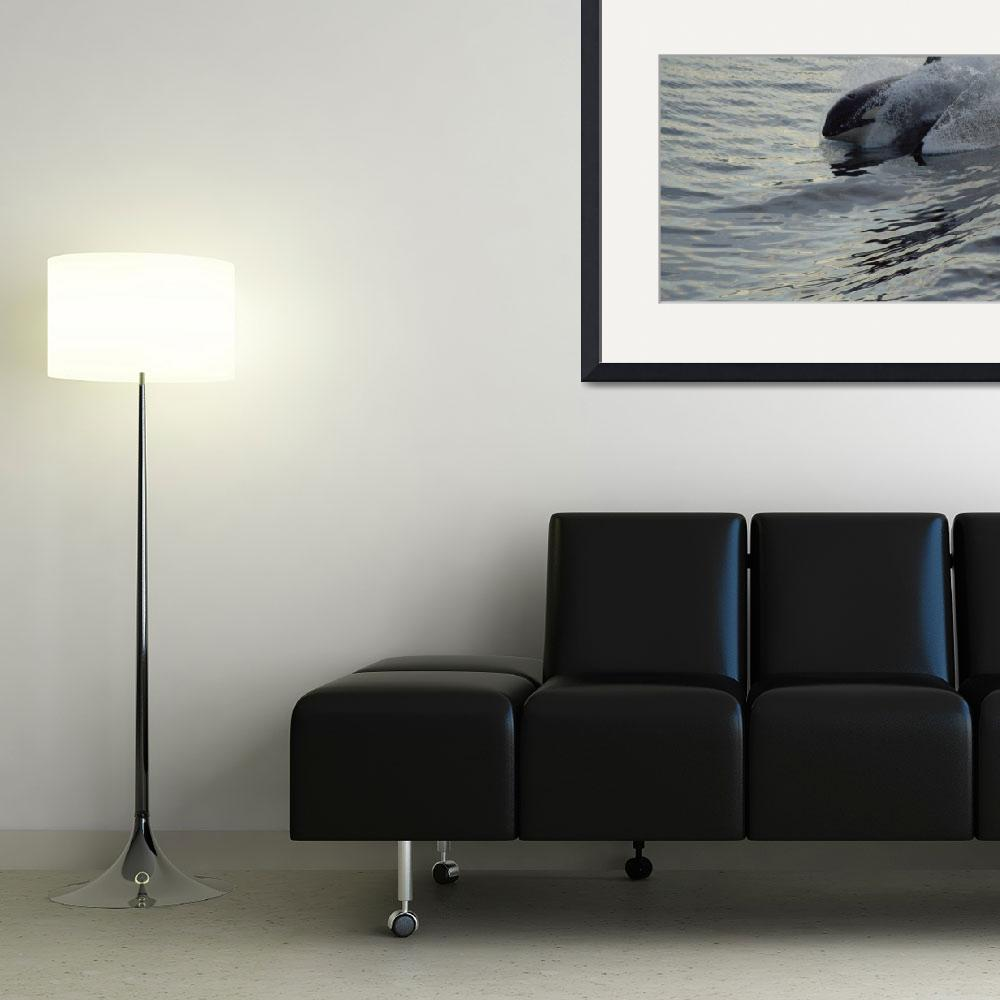 """Orca surfing II&quot  (2009) by MargaretHarding"