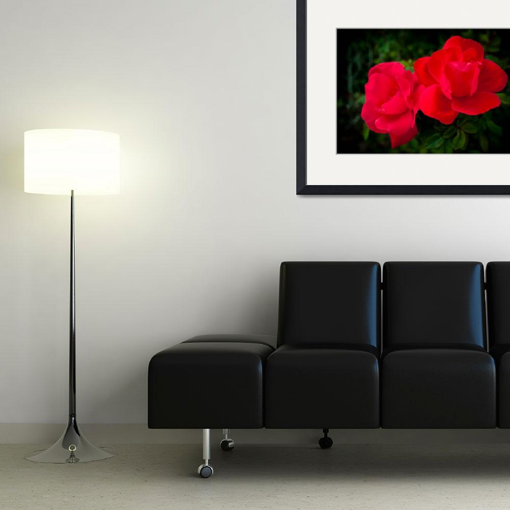 """Two Red Roses&quot  (2013) by DanBourque"
