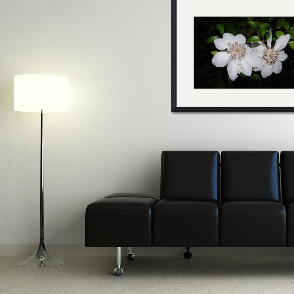 """""""floral white clematis&quot  by sherryswest"""