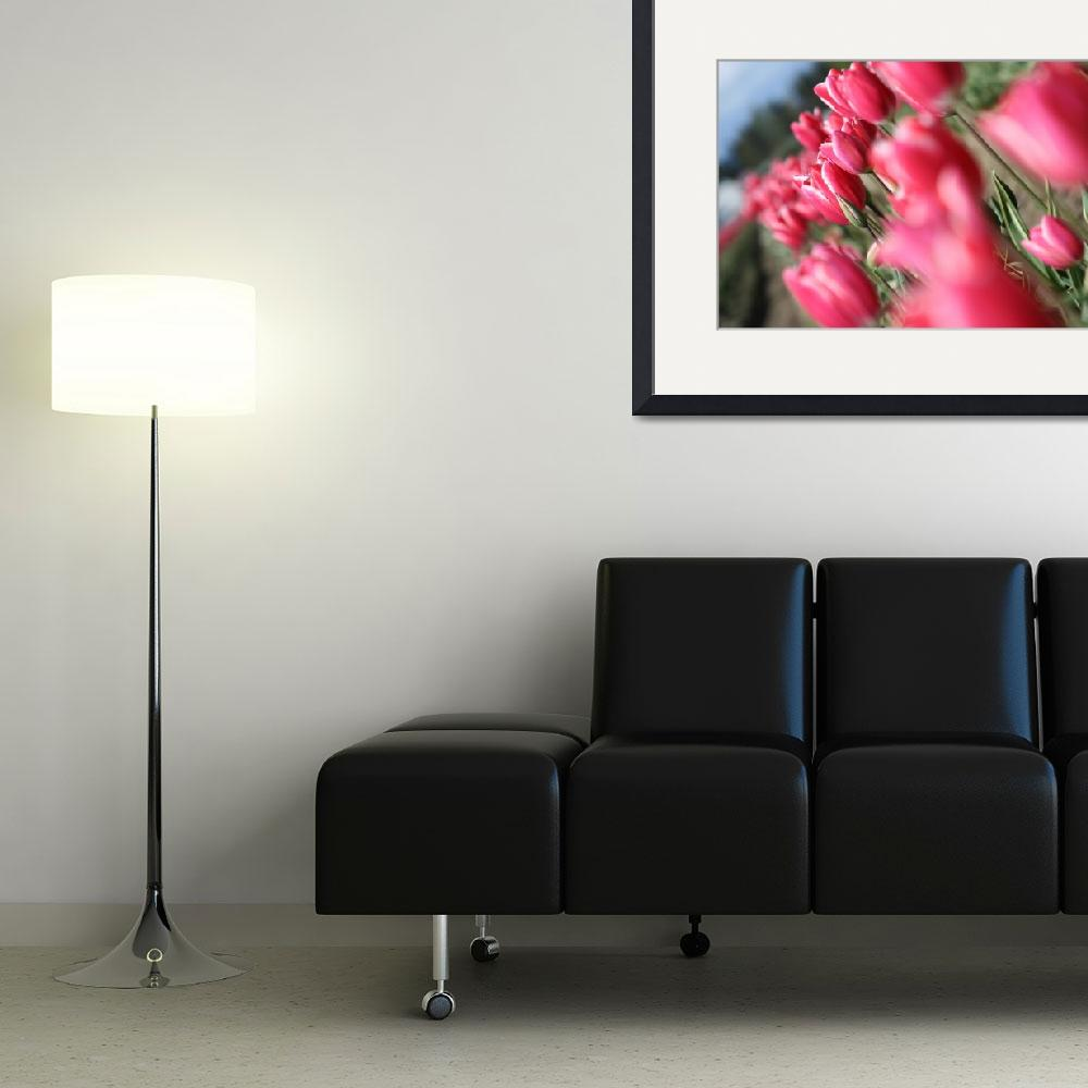 """""""Pink tulips&quot  by hendryp"""
