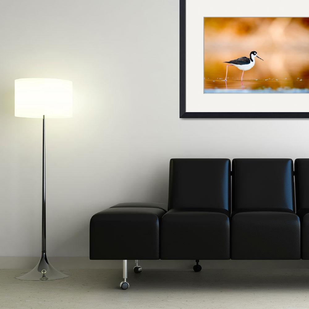 """Black-Necked Stilt at Sunset&quot  (2009) by dogzilla"