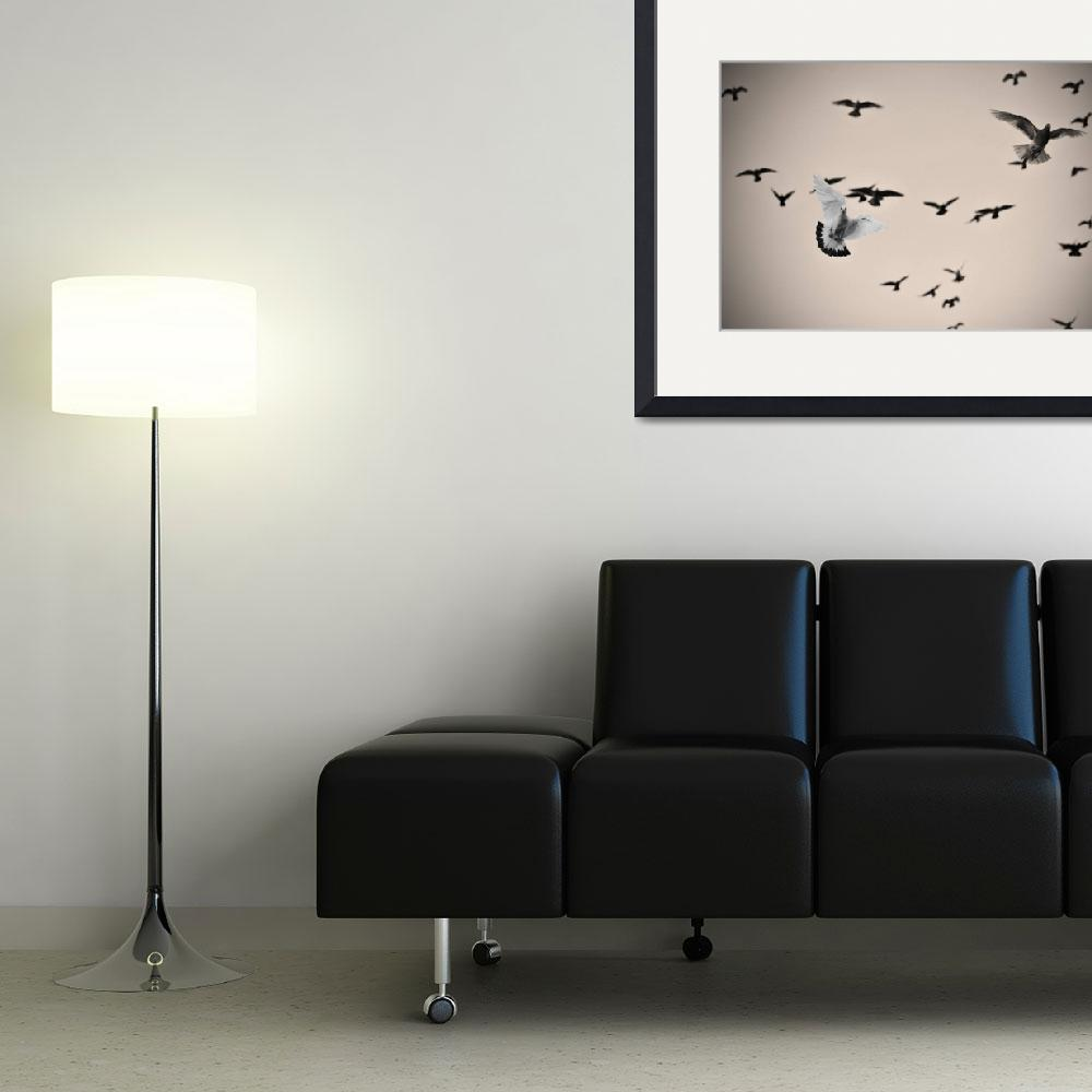 """""""White dove and black dove in the air&quot  by emilt"""