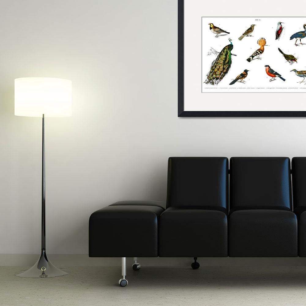 """""""Different types of birds illustrated by Charles De""""  by motionage"""