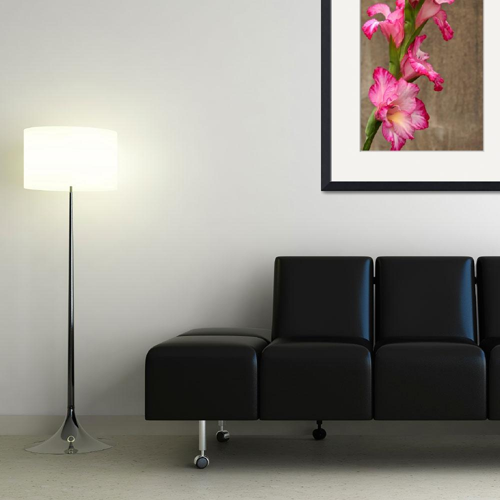 """""""Gladiola Grunge&quot  (2013) by LightHeart"""