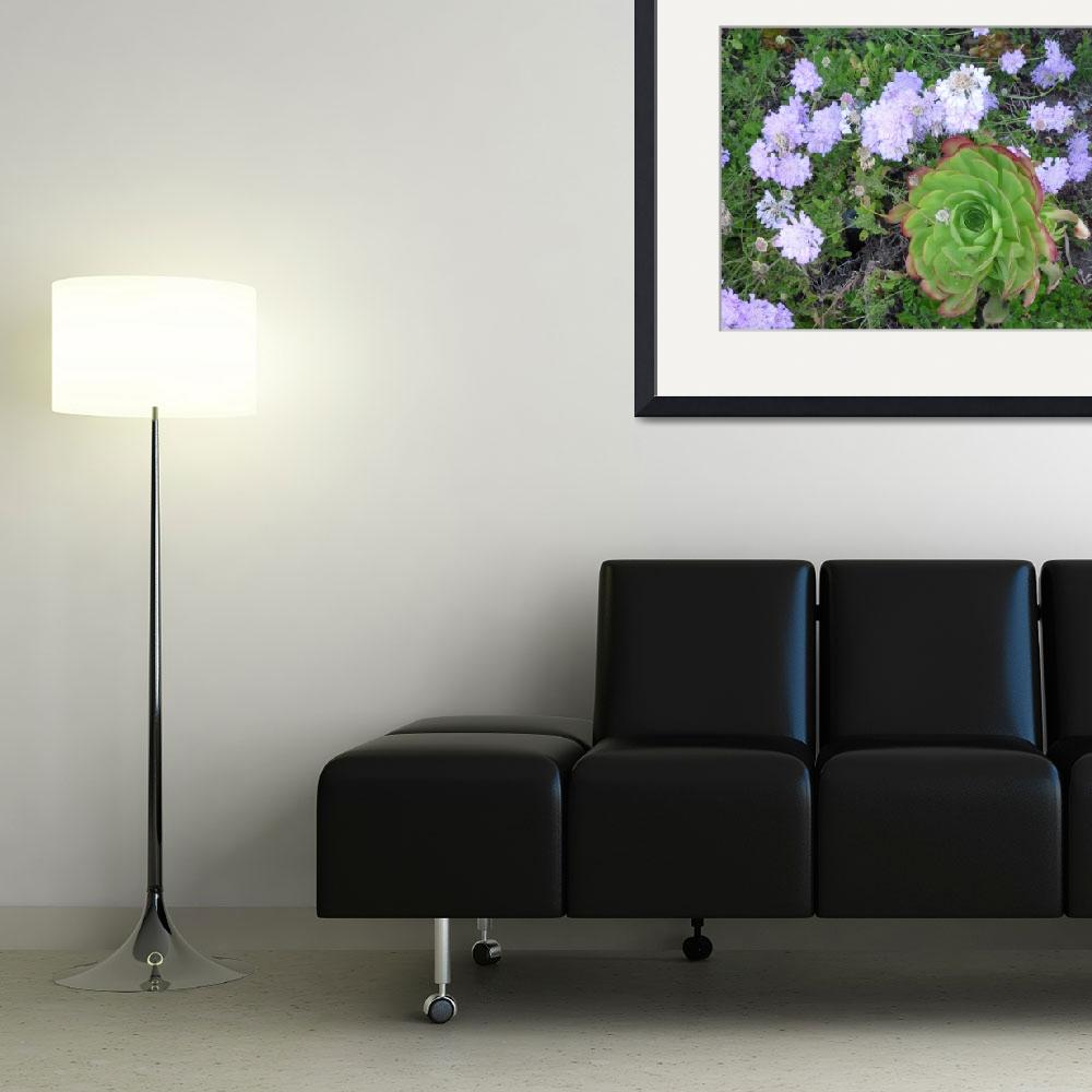 """""""Channel Islands Harbor Peninsula Plants&quot  by seewater"""