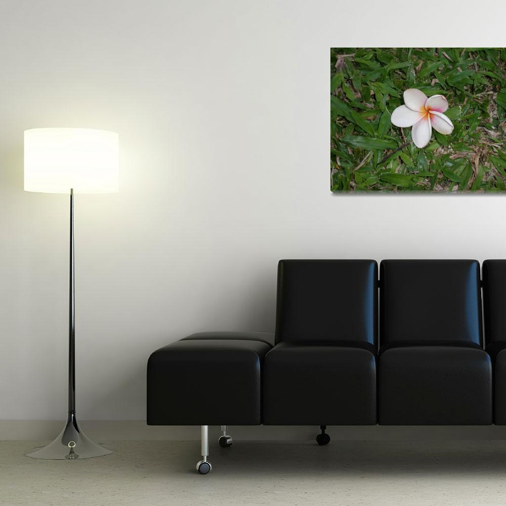 """""""Flower in St. Lucia""""  (2008) by NatalieRobinson"""