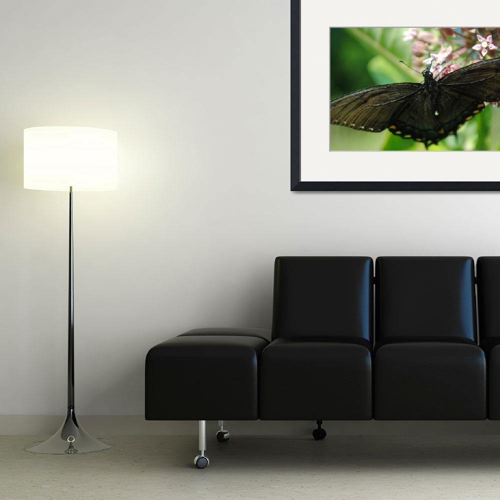 """""""Black Butterfly&quot  (2012) by madworld"""