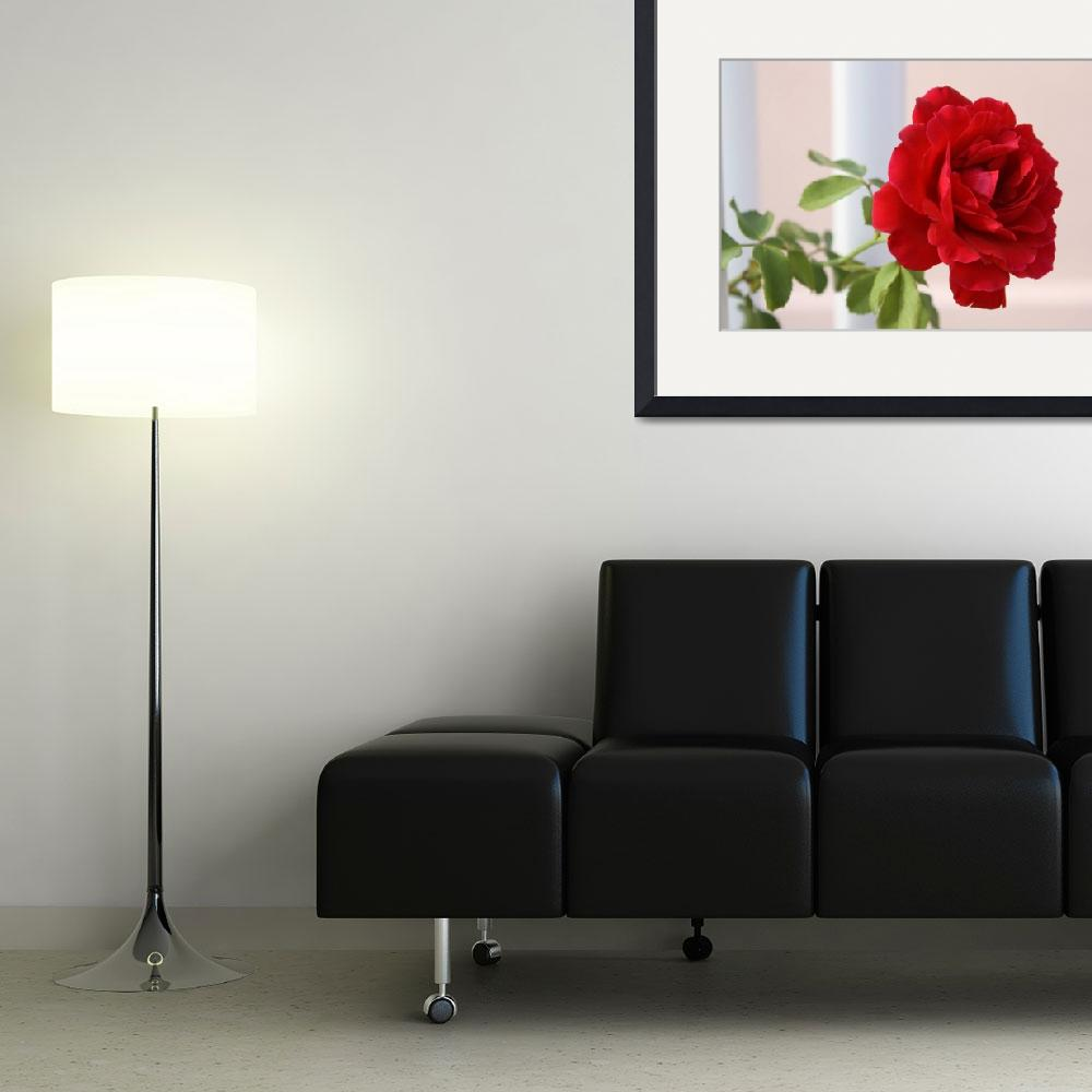 """""""Red rose&quot  (2010) by irinads14"""