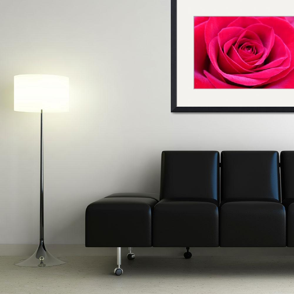 """""""Red Rose&quot  (2009) by H_Kaufman"""