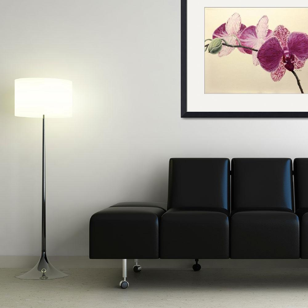 """""""Pink Orchid""""  (2014) by marypalmer"""
