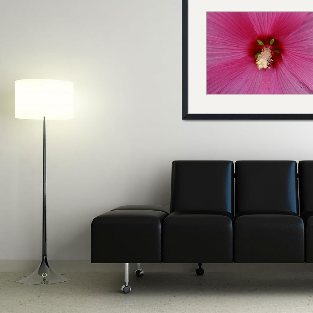 """""""""""Pink Hibiscus""""""""  (2007) by vpardophotography"""