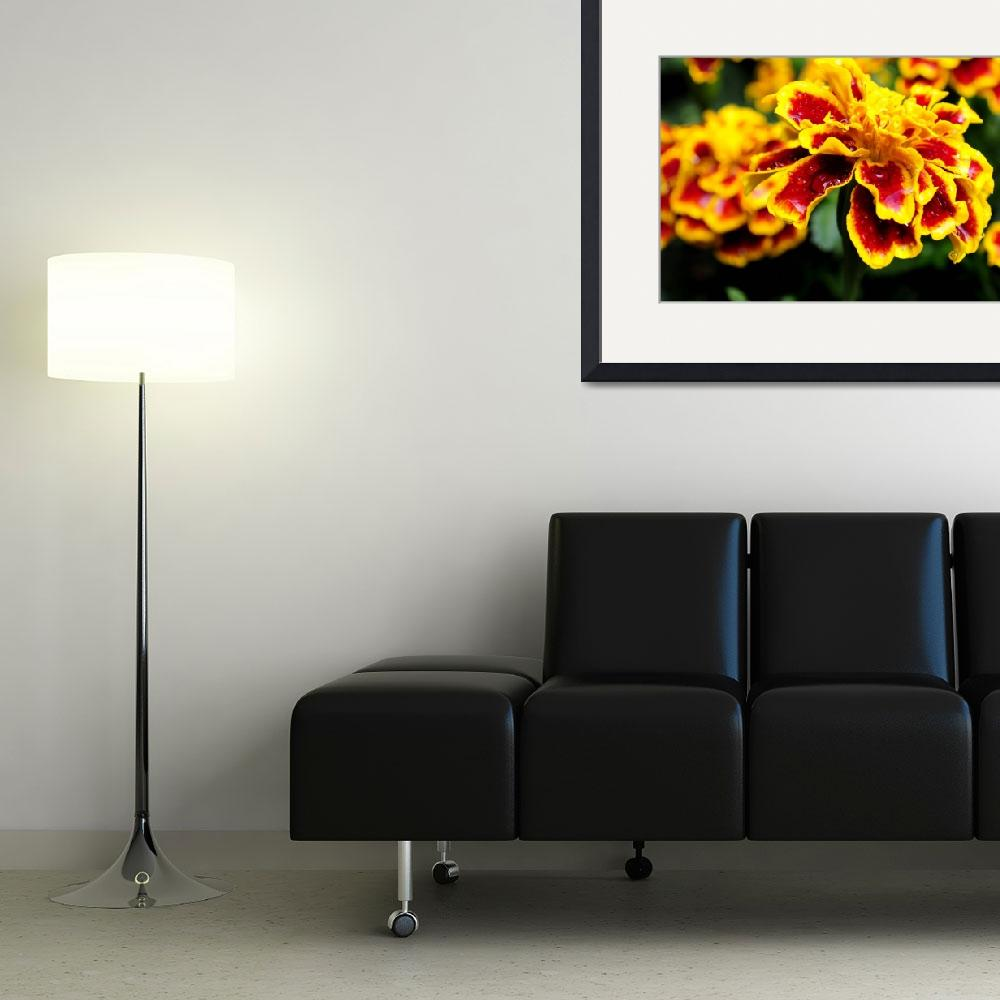 """""""Marigold&quot  by bsbaird2"""