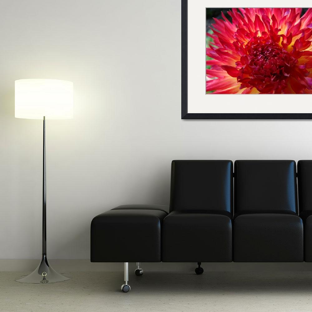 """""""CHRISTMAS GIFT GALLERY Red Purple Dahlia Flower&quot  (2009) by BasleeTroutman"""
