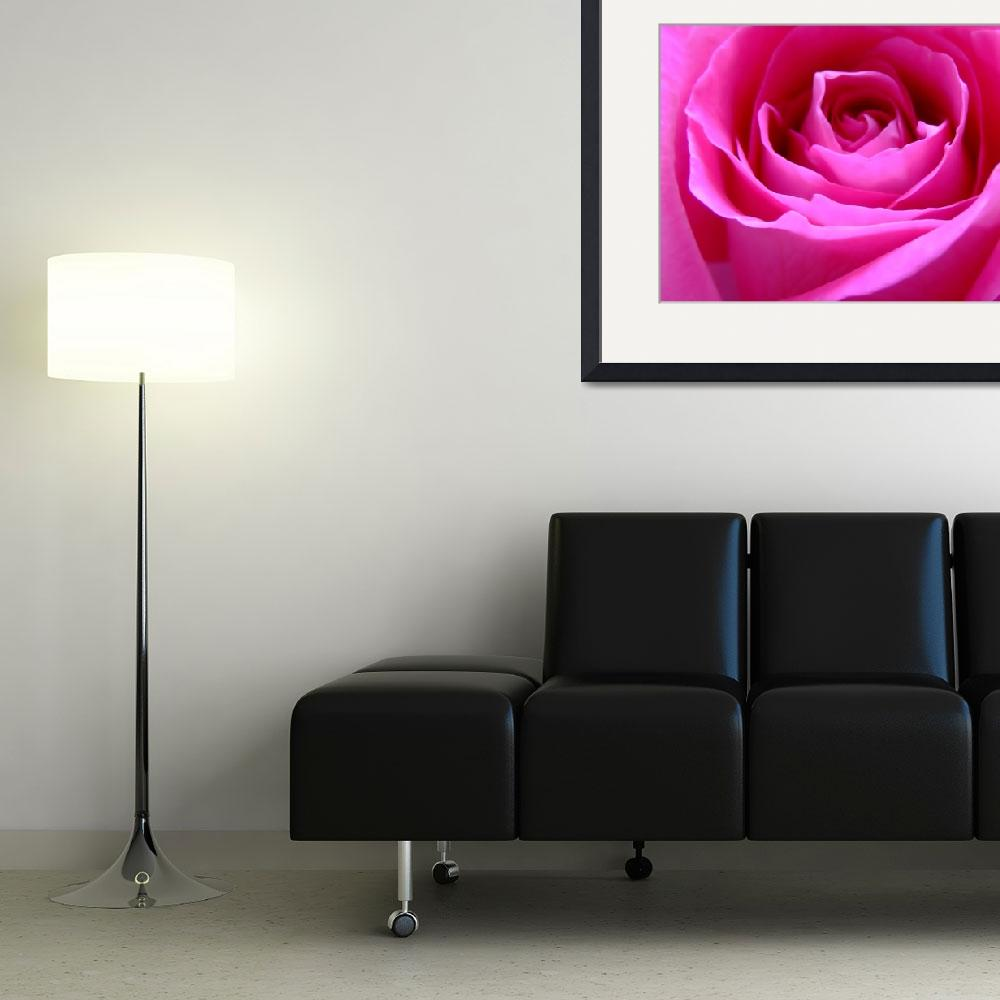 """""""Pink Rose&quot  (2009) by Hartphotography"""