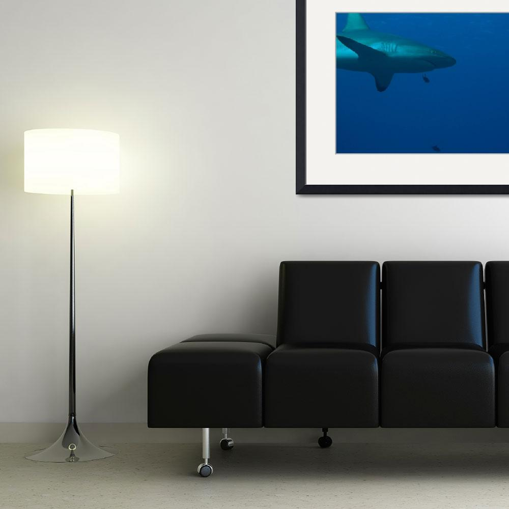 """""""Sharks&quot  (2008) by KazooDiver"""