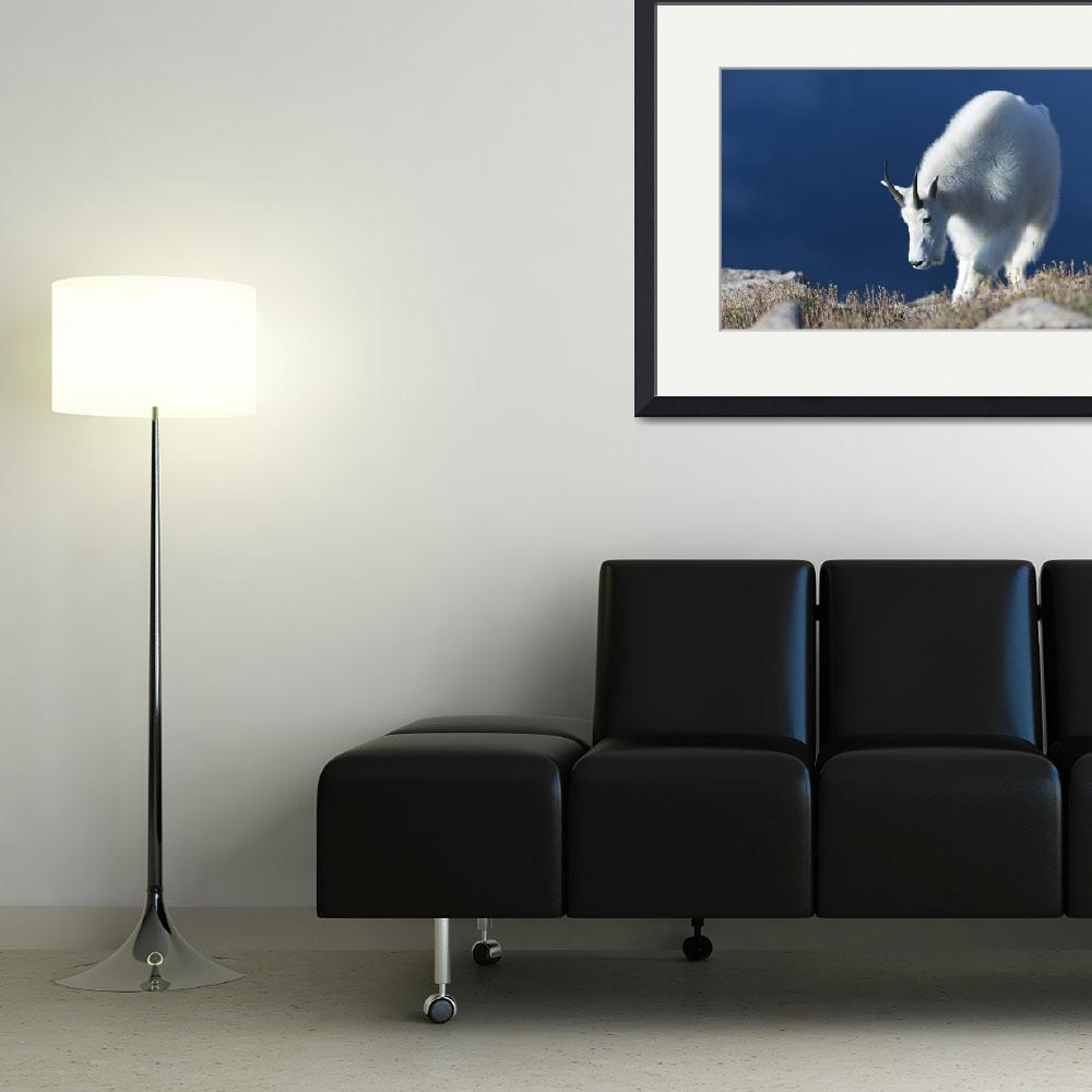 """""""Rocky Mountain Goat lll""""  (2013) by GLL"""