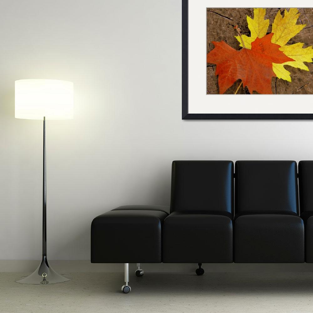 """""""Colorful Fall Leaves&quot  (2011) by photosbybritney"""