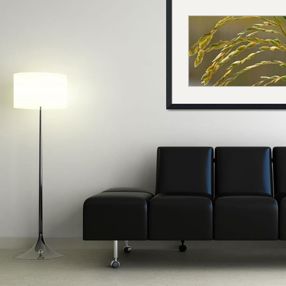 """Grass on Ocean Sand Dune""  (2012) by KsWorldArt"