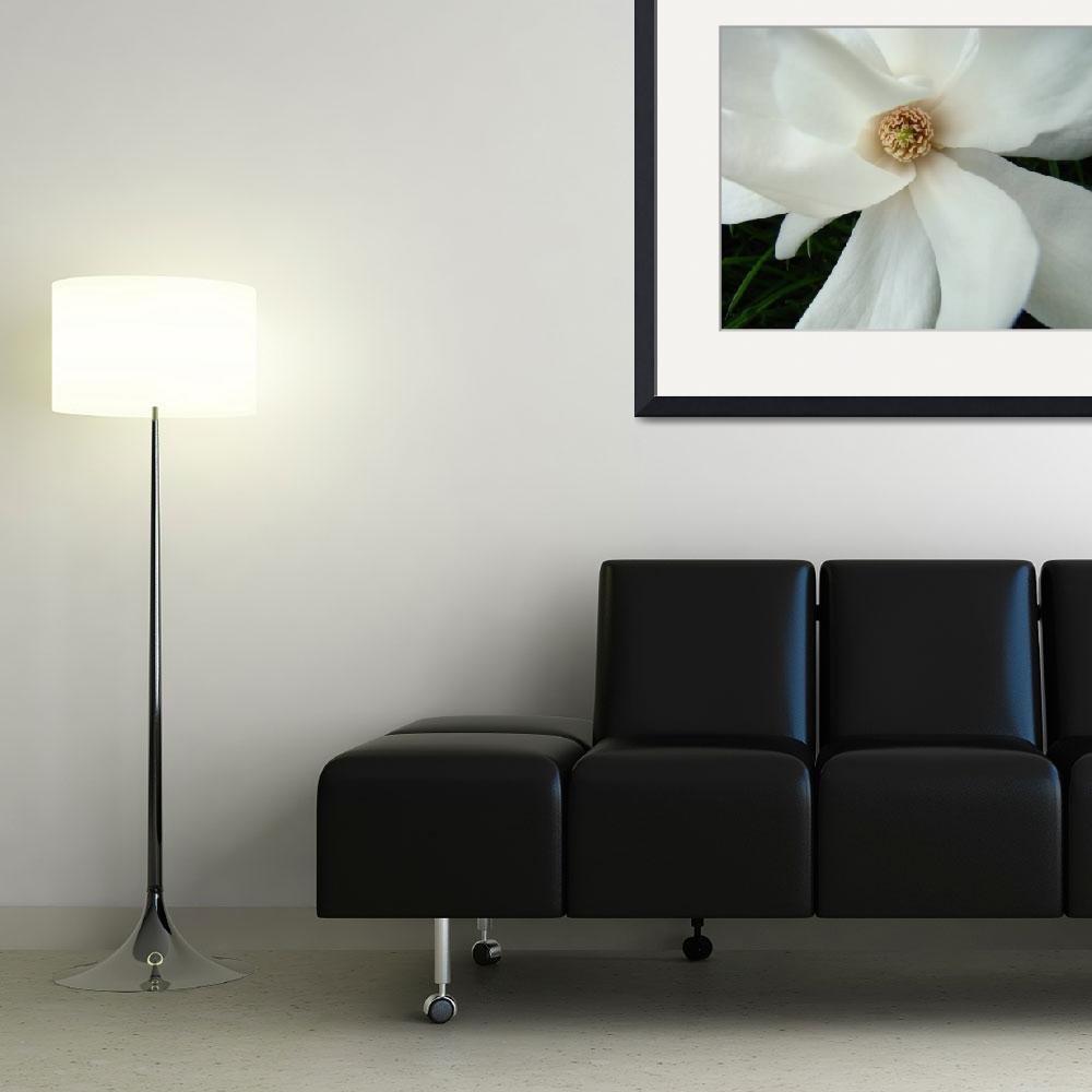 """""""Spring Magnolia Flower White Magnolia Tree Art&quot  (2009) by BasleeTroutman"""