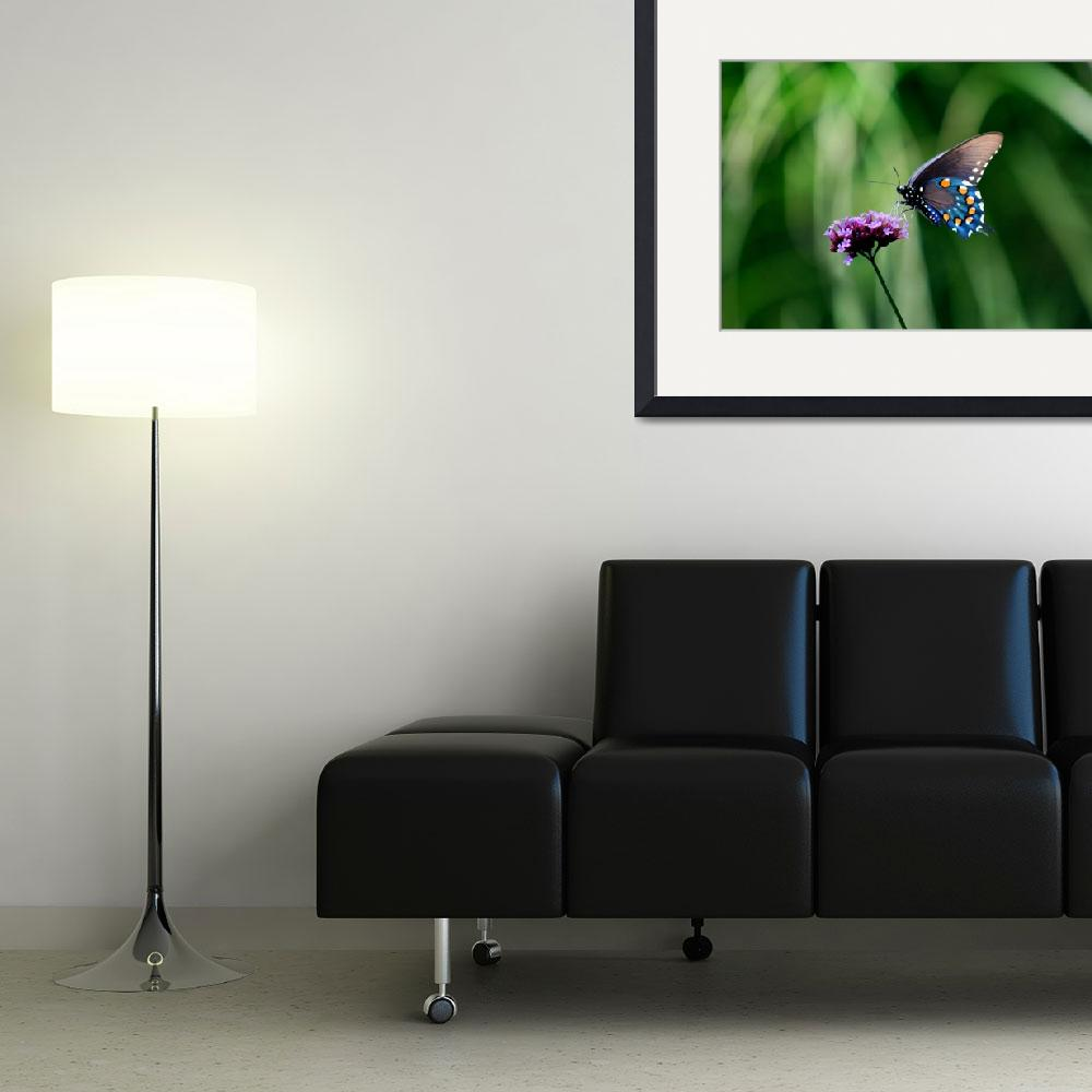 """""""Butterfly  Pipevine Swallowtail&quot  (2011) by KsWorldArt"""