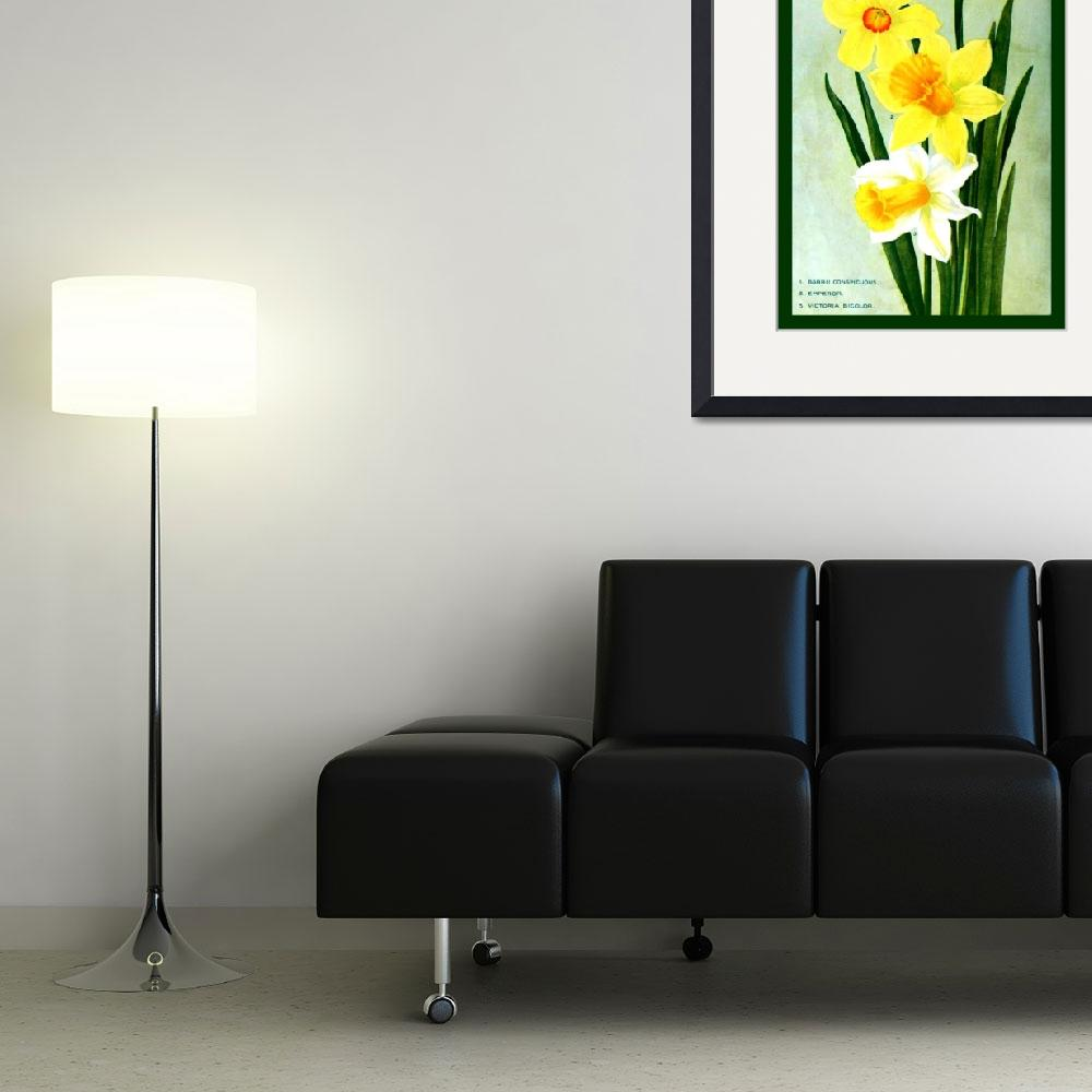 """Botanical Flower Daffodils Ad 1913 border&quot  (2013) by TheNorthernTerritory"