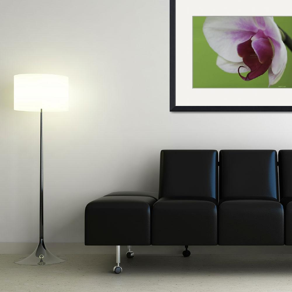 """""""Orchid On Green""""  (2011) by DBenoit"""