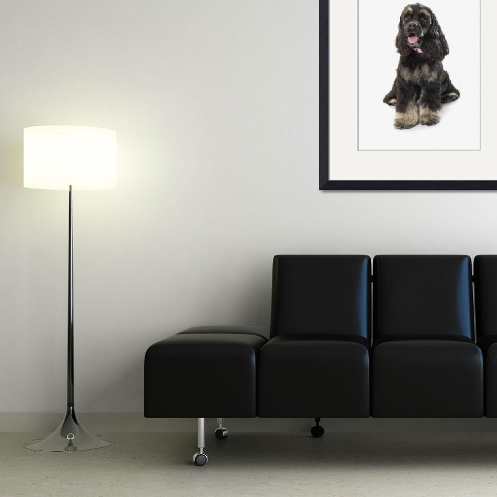 """Black Cocker Spaniel With Golden Boots On White St""  by DesignPics"