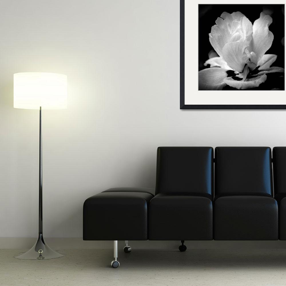 """""""Blossom In Black and White""""  (2012) by bavosiphotoart"""