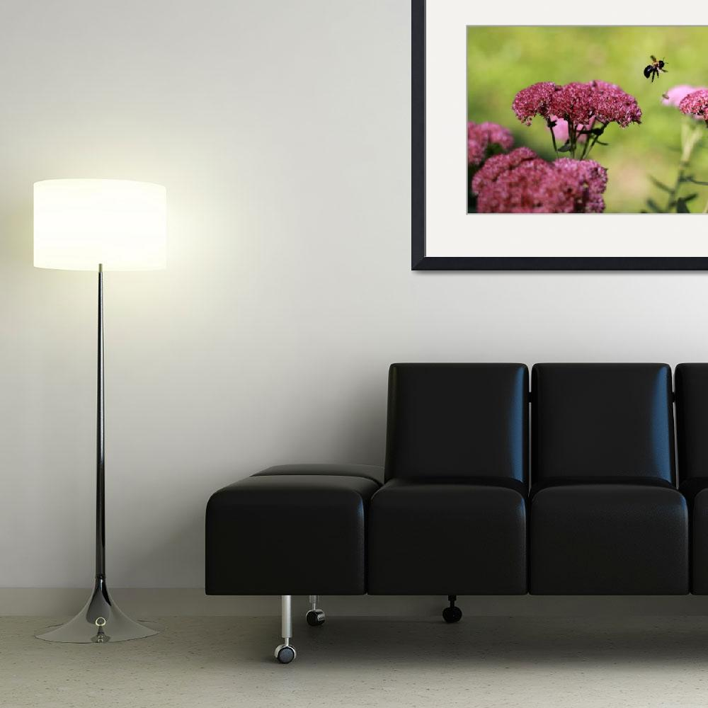 """""""Sedum And Bee&quot  (2009) by kman005"""